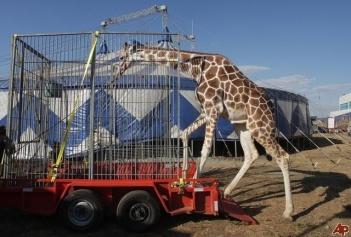 nicaragua-moscow-circus-2009-3-11-20-33